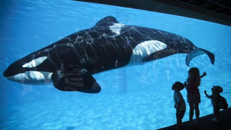 Why The Majority Of People Are Wrong Regarding What's Happening At SeaWorld